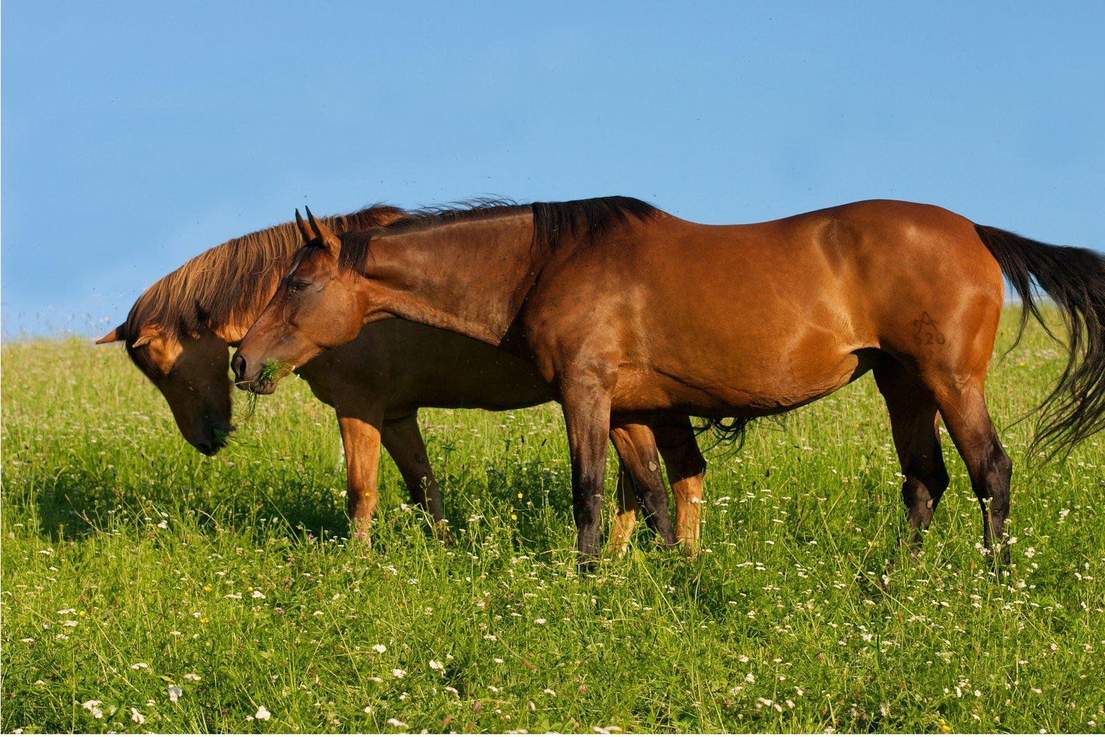 Heufütterung auch wenn Pferde auf der Weide sind