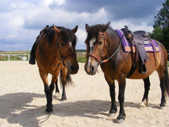 zweige pferd knabbern