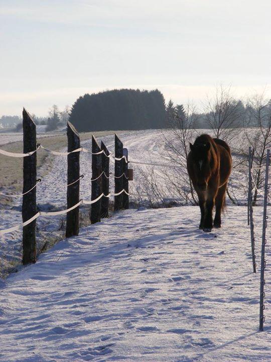 Der Paddocktrail im Winter