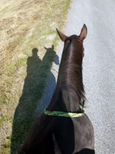 Flechtzügel Herr Pferd