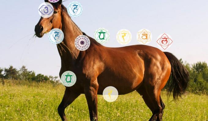 Die Chakren des Pferdes