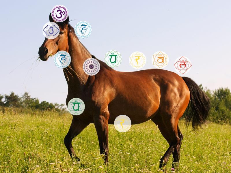 Chakren des Pferdes