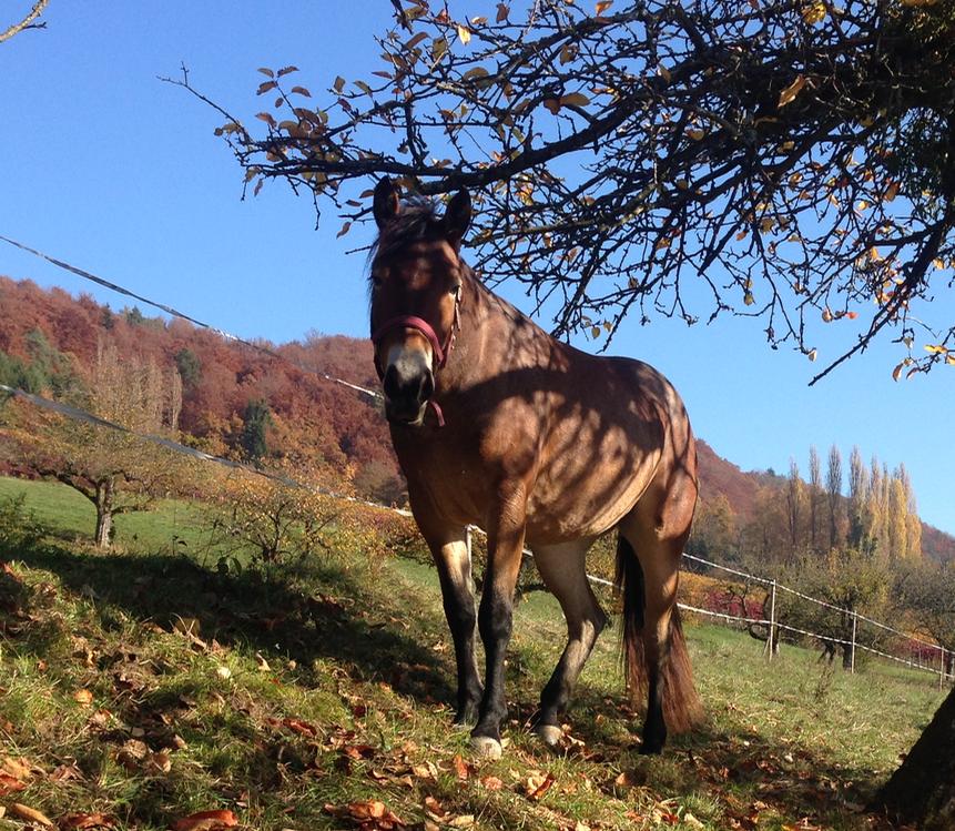 Penny das Pony auf der Weide