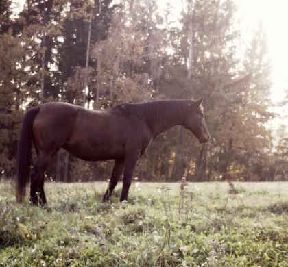 Wie du dein Senior-Pferd fit halten kannst!