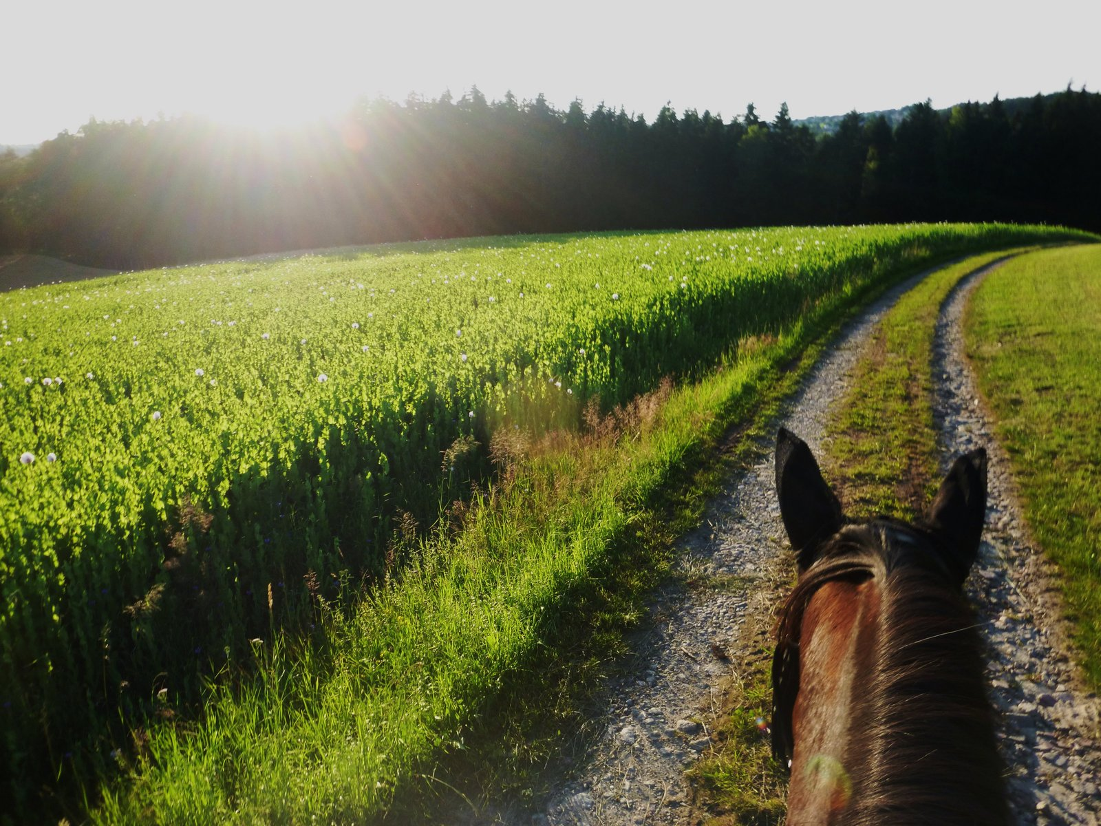 As Seen Through Horses Ears - Summer in Austria