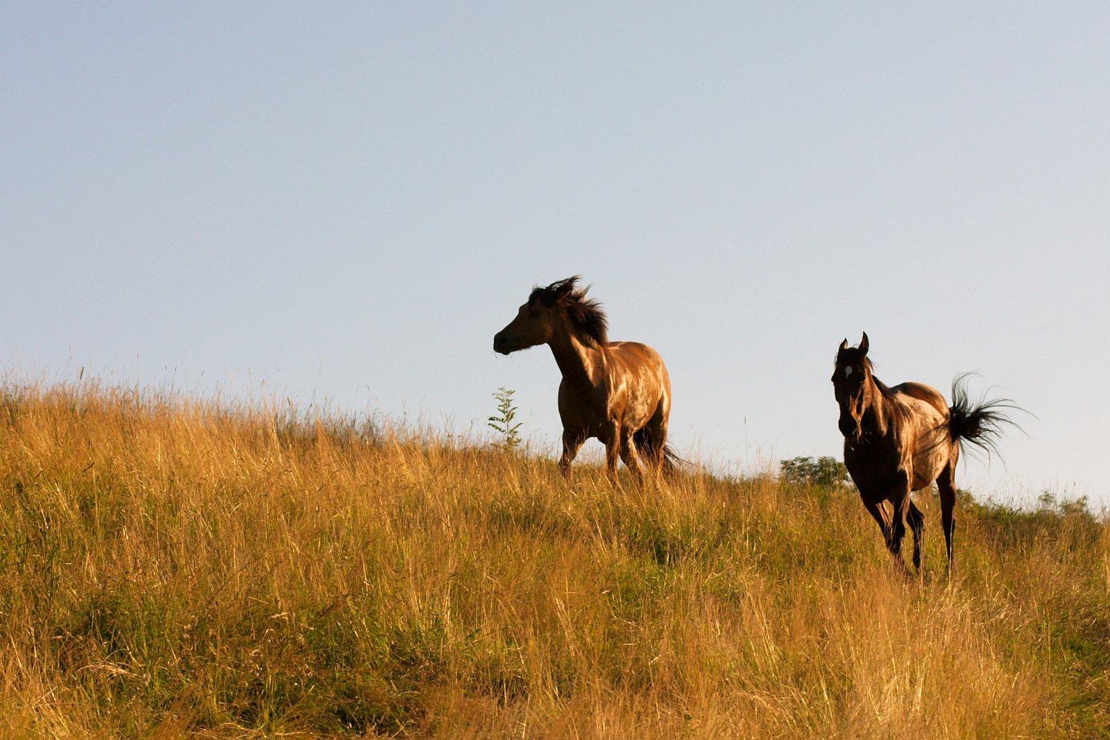 Heuf tterung bei pferden wie lange sollten fresspausen for Boden heuraufe pferd